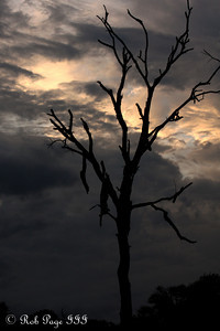 A lone tree - Sabi Sabi, South Africa ... March 14, 2010 ... Photo by Rob Page III